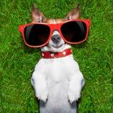 Mycket rolig hund Royaltyfri Foto