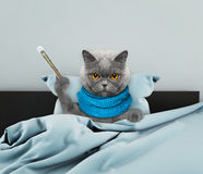Mycket sjuk katt i säng Royaltyfria Foton