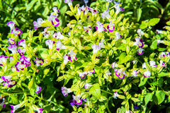 Mycket små blommor i glashuset royaltyfri bild