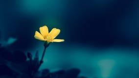Mycket små blommor stänger sig upp 2 Royaltyfri Foto