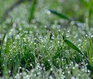 Mycket små morgondaggdroppar på gräset Royaltyfri Bild