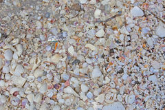 Mycket små skal på en strand, slutsikt royaltyfria bilder