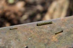 Mycket små svarta larver boxen skottlossning på stängerna av järnvägen för det smala måttet Miljö- katastrof i Mezmay Royaltyfria Bilder