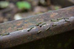 Mycket små svarta larver boxen skottlossning på stängerna av järnvägen för det smala måttet Miljö- katastrof i Mezmay Arkivbild