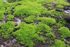 Mycket små varelser i natur Arkivfoto