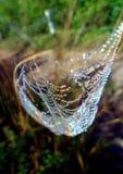 Mycket små vattensmå droppar på det lilla bladet arkivfoton