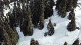 Mycket snö, lös skog och berg stock video