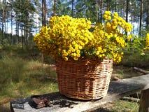 Mycket trevlig träkorg som fylls med gula blommor arkivfoton