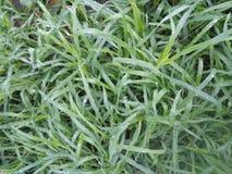 Mycket trevligt grönt gräs i landsbygder royaltyfria bilder