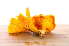 Mycète d'or de chanterelle sur le panneau de découpage Photo stock