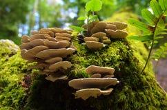 Mycète de forêt Image stock