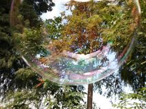 Mydlany bąbel i drzewa Zdjęcia Royalty Free