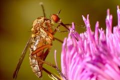 Mygga på rosa färgblomman royaltyfri bild