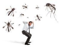Myggaattack arkivfoto