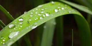 Myggadagg stort vatten för fotografi för makro för droppgreenleaf Arkivfoton
