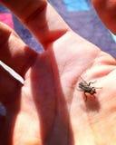 Myggan läser gömma i handflatan arkivbild