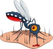 Myggan suger blod till huden Royaltyfri Bild