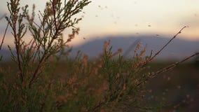 Myggor sitter på filialerna av busken