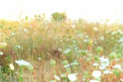 Myjący out pole wildflowers zdjęcia royalty free