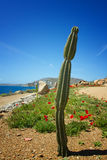 Mykonos beach Royalty Free Stock Photography