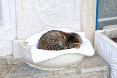 Mykonos Cat Royalty Free Stock Photography