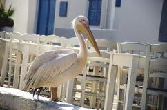 Mykonos Pelican Royalty Free Stock Images