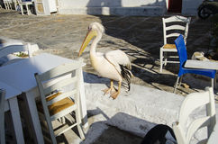 Mykonos pelican Royalty Free Stock Images