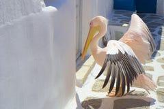 Mykonos pelikan, Grekland Royaltyfria Bilder