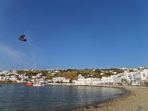 Mykonos Town Beachfront under Vivid Blue Sky with a Flying Pigeon, Mykonos island Stock Images