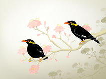 Myna birds Stock Photos
