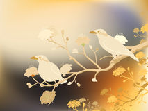 Myna birds Stock Photos