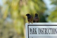 Myna im Safa Park Dubai Lizenzfreies Stockfoto