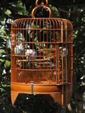 Mynah bird in a cage in Hong Kong. Mynah bird in a cage in the Flower Garden in Hong Kong stock images