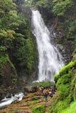 Mynapi瀑布的老牛在果阿 免版税库存照片