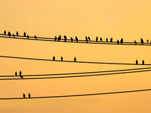 Mynas birds sitting on wires and sunset sky Stock Image