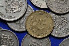 Mynt av Marocko Arkivfoto