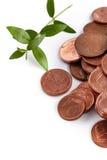 Mynt för eurocent och grön grodd Arkivbilder