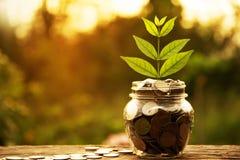Mynt i exponeringsglas- och buntmynt med trädet för affärs- och skattse royaltyfria bilder