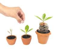 Mynt i jord med den unga växten och den mänskliga handen Arkivbilder