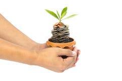 Mynt i jord med den unga växten och den mänskliga handen Royaltyfri Fotografi