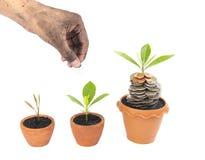 Mynt i jord med den unga växten och den mänskliga handen Royaltyfria Bilder
