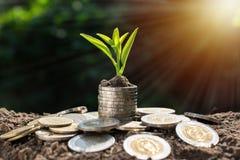 Mynt med den unga växten överst och den ljusa kulan i mjuka naturlodisar royaltyfria foton