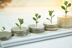 Mynt med trädet i aktieandelsfondbegrepp royaltyfri bild