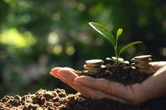 Mynt och ung växt som växer på jorden för sparande eller natur c fotografering för bildbyråer