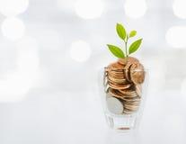 Mynt och växt i flaska, tillväxt för affärsinvestering och besparingbegrepp royaltyfri bild