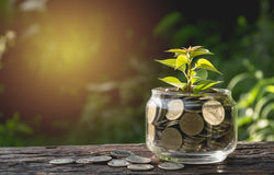 Mynt sätter i exponeringsglas och staplar mynt för växande affär och skatt arkivfoto