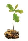 mynt som växer treen för pengaroakstapel arkivbild