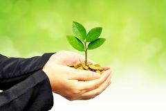 mynt som växer treen Fotografering för Bildbyråer