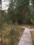 Myr i Vosgesna Arkivfoto