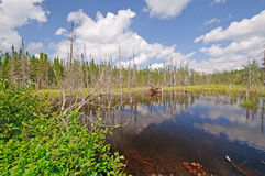 Myr Lake i vildmarken Royaltyfria Bilder